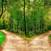 Divided path in the forest