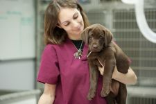 Veterinary Assistant with puppy